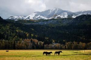 Colorado's 2014-2015 Open Enrollment & Renewal Season Nears